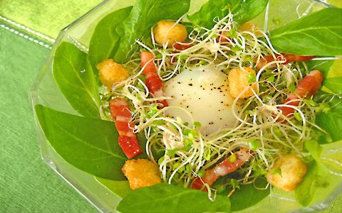 ブロッコリー スーパースプラウトのシーザーサラダ